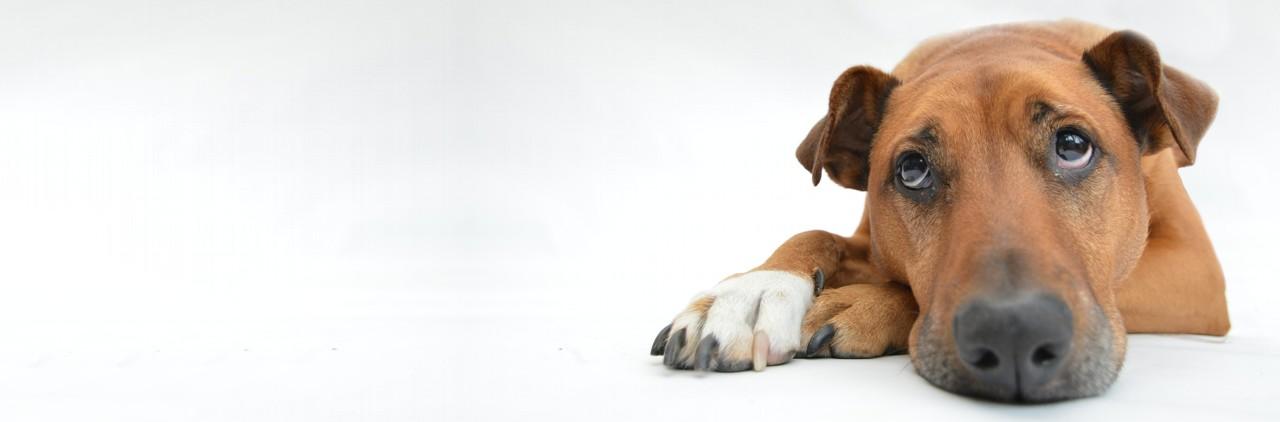 Hat mein Hund IBD und/oder IGOR?
